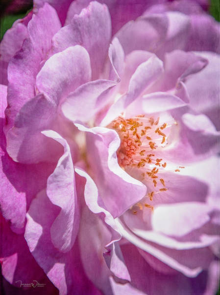 Photograph - Purple Petals By Tl Wilson Photography by Teresa Wilson