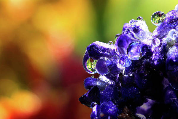 Wall Art - Photograph - Purple Rain by Gary Yost