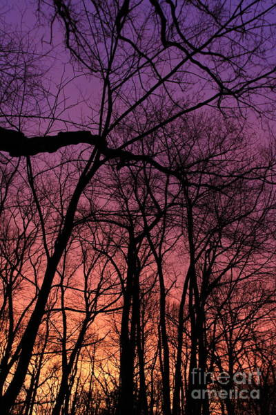 Photograph - Purple Sky by Paula Guttilla