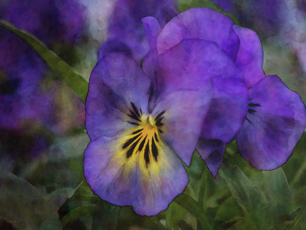 Photograph - Purple Spring Pansy 6136 Idp_2 by Steven Ward