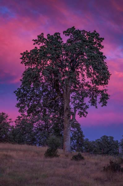 Photograph - Purple Sunset by Jonathan Hansen