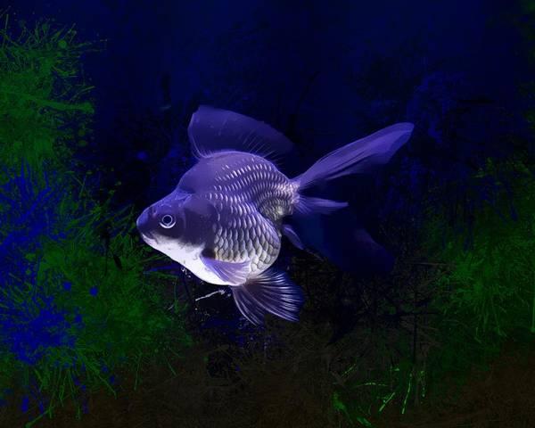 Digital Art - Purple Tamasaba Goldfish by Scott Wallace Digital Designs