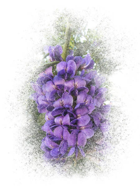 Photograph - Purple Texas Mountain Laurel Flower Cluster by Patti Deters
