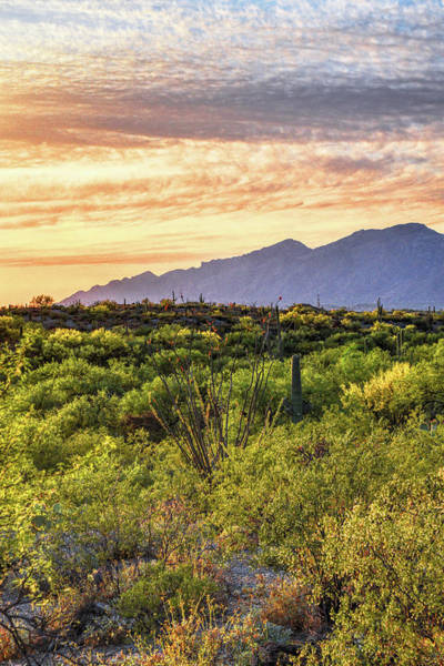 Photograph - Pusch Ridge Golden Hour by Chance Kafka