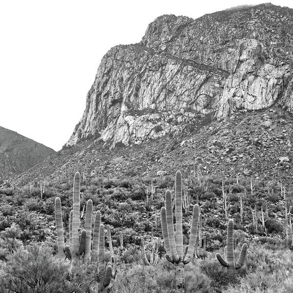 Coronado National Forest Photograph - Pusch Ridge by Mitch Cat