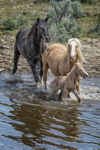 Photograph - Putting One's Foal First by Belinda Greb