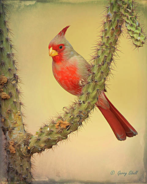 Photograph - Pyrrhuloxia-filter by Gerry Sibell