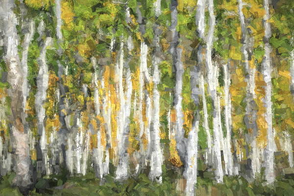 Wall Art - Photograph - Quaking Aspen Abstract by Donna Kennedy