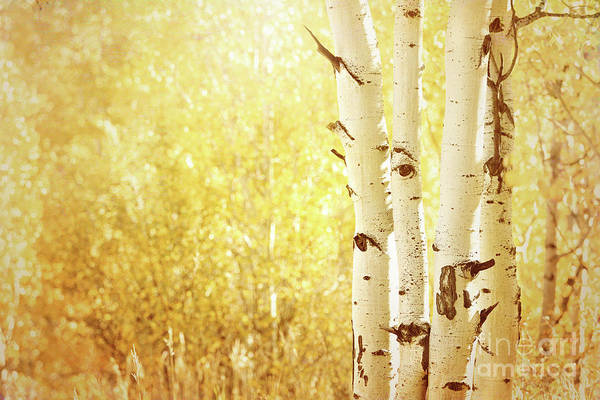 Photograph - Quaking Aspens by Beve Brown-Clark Photography