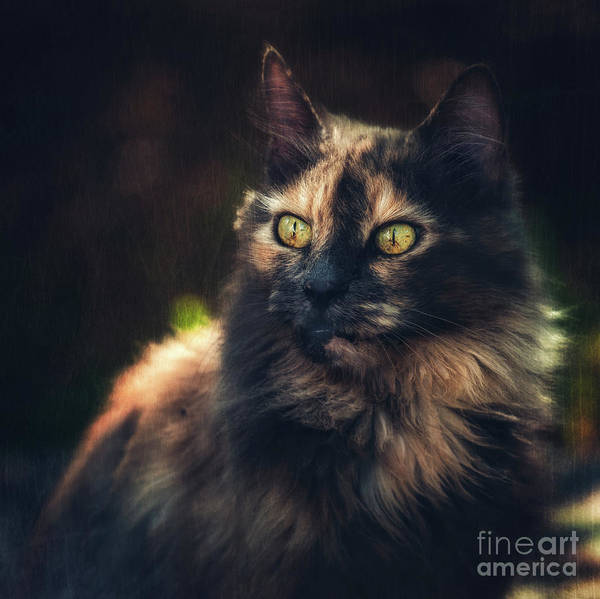 Wall Art - Photograph - Queen by Flo Photography