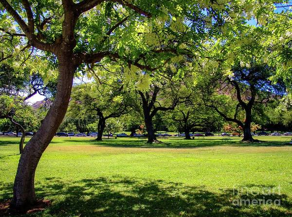 Photograph - Queen Kapiolani Park At The Foot Of, Diamond Head Crater by D Davila