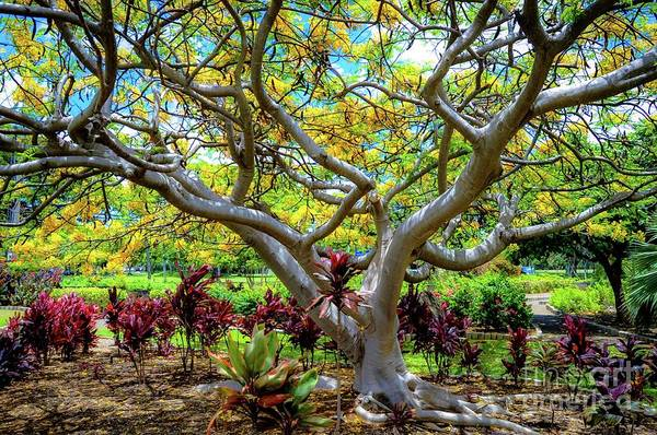 Photograph - Queen Kapiolani Park - Trees, Plants, And Flowers - Tropical by D Davila