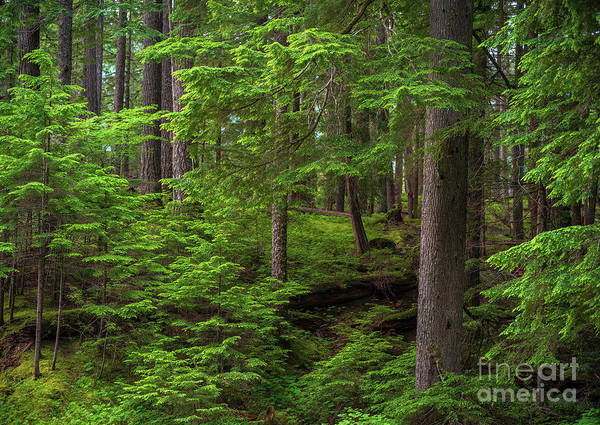 Wall Art - Photograph - Quiet Forest Layers by Mike Reid