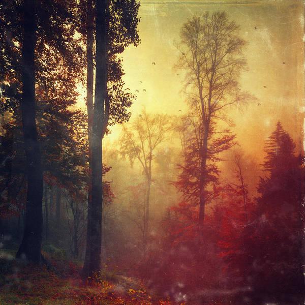 Photograph - Quiet Morning - Misty Fall Forest by Dirk Wuestenhagen