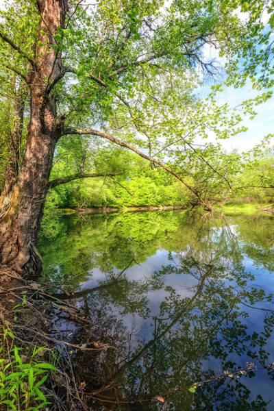 Photograph - Quiet Reflections by Debra and Dave Vanderlaan
