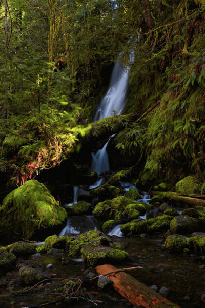 Photograph - Quinault Waterfall by Lost River Photography