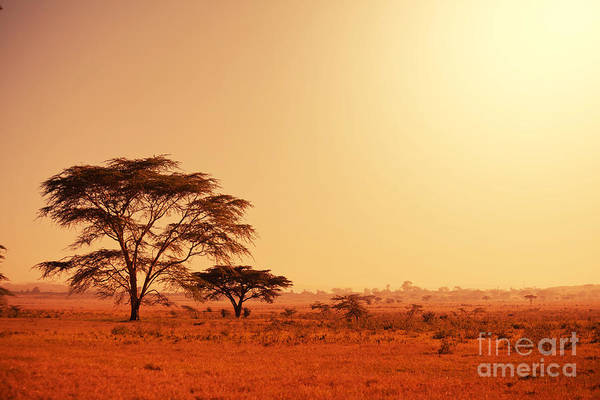 Wall Art - Photograph - Quiver Tree In Namibia, Africa by Galyna Andrushko