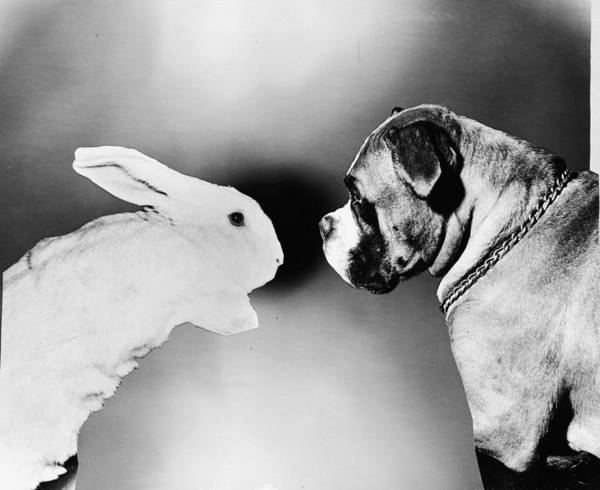 1961 Photograph - Rabbit And Dog by Keystone