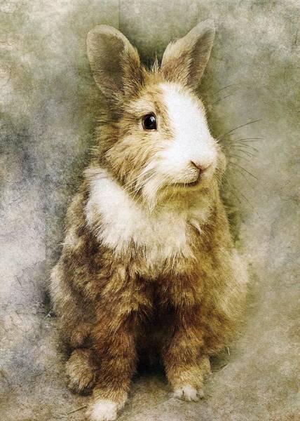 Wall Art - Painting - Rabbit by ArtMarketJapan
