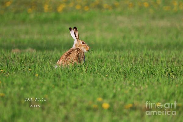 Photograph - Rabbit Chews by Donna L Munro