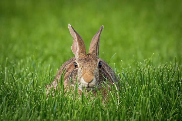 Photograph - Rabbit Gaze by Allin Sorenson