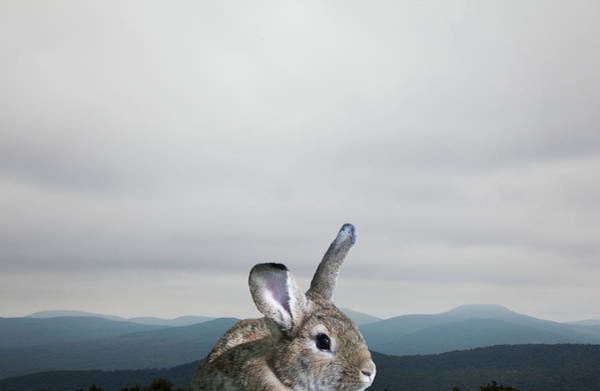 Body Parts Photograph - Rabbit In Front Of Mountains by Thomas Jackson