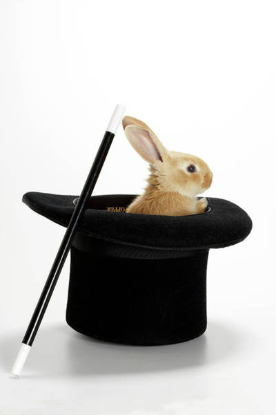 Top Hat Photograph - Rabbit In Hat With Magic Wand by American Images Inc