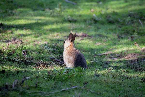 Photograph - Rabbit In The Woods by Scott Lyons
