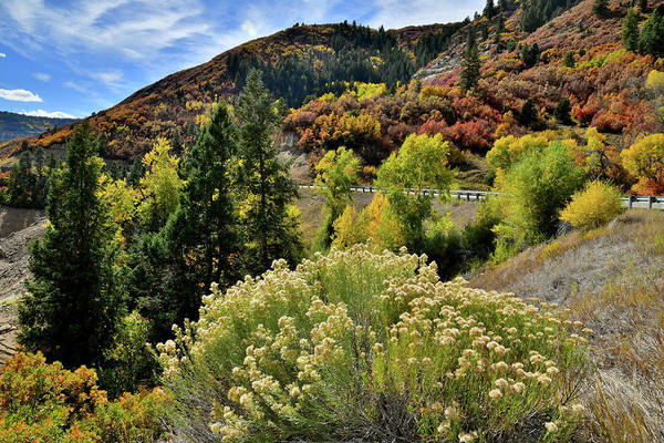Photograph - Rabbitbush And Fall Colors Along Highway 133 by Ray Mathis