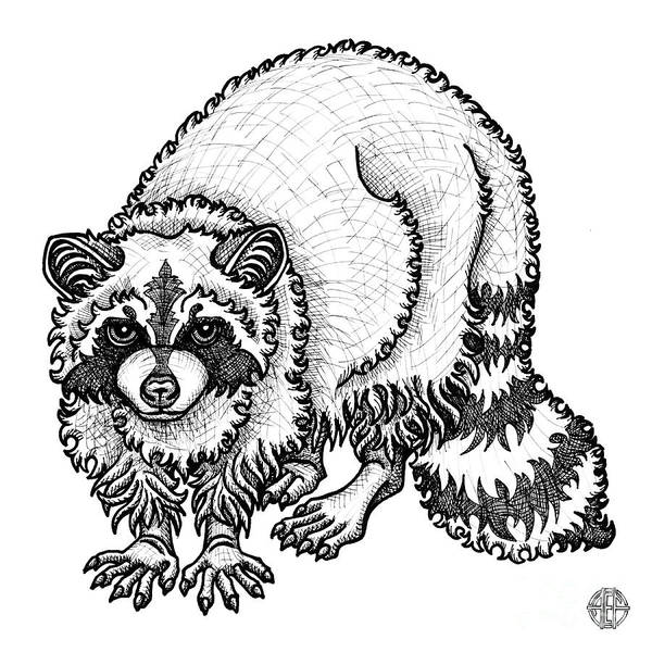 Drawing - Raccoon by Amy E Fraser