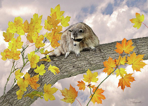 Wall Art - Digital Art - Raccoon In Maple Tree by M Spadecaller
