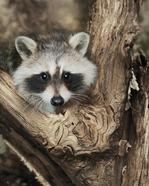 Wall Art - Photograph - Raccoon Portrait by Lori Deiter
