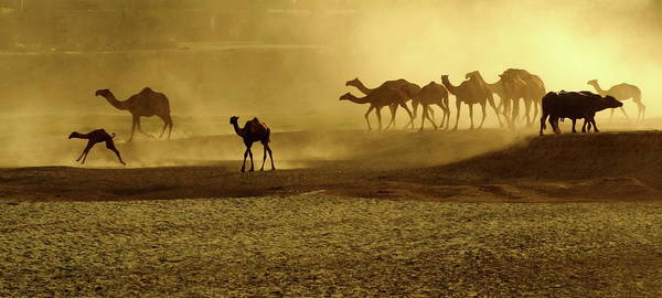 Dust Photograph - Race For Water by Amir Mukhtar