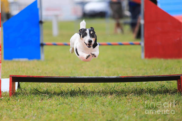 Wall Art - Photograph - Racing Dog For Agility by Francesco De Marco