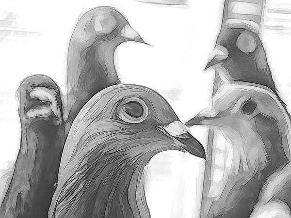 Photograph - Racing Pigeons Group Black And White by Don Northup