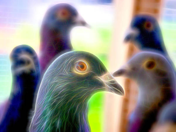 Photograph - Racing Pigeons Group Fibers by Don Northup