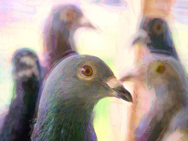 Photograph - Racing Pigeons Group Impasto by Don Northup