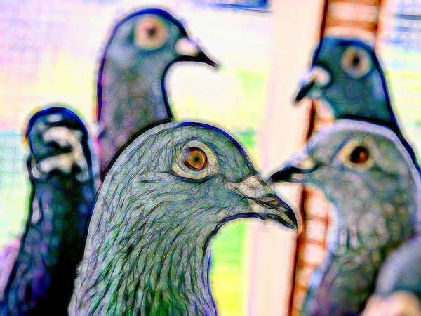 Photograph - Racing Pigeons Group Kaleidoscope by Don Northup
