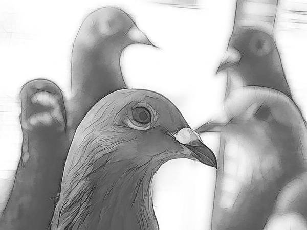 Digital Art - Racing Pigeons Group Sketch by Don Northup
