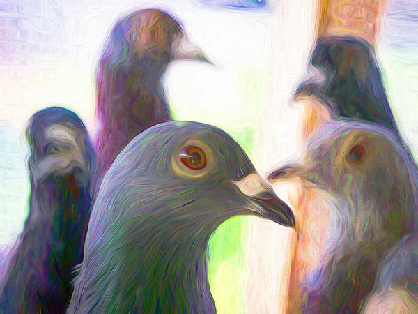 Photograph - Racing Pigeons Group Swirly by Don Northup