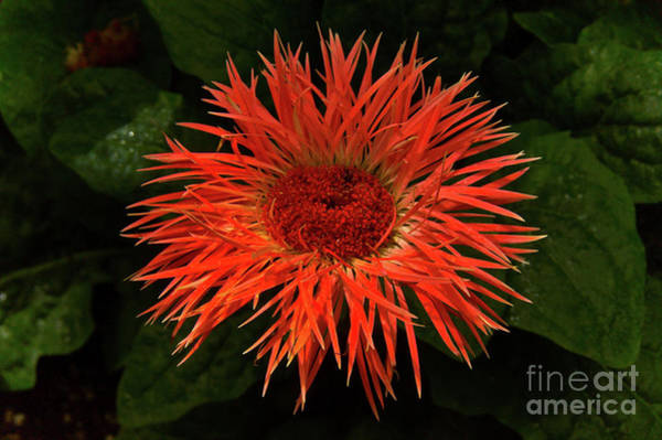 Wall Art - Photograph - Radiance  by Elaine Manley