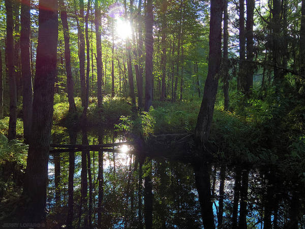 Swamp Photograph - Radiance  by Jerry LoFaro