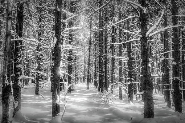 Wall Art - Photograph - Forest Glow by Eric Glaser