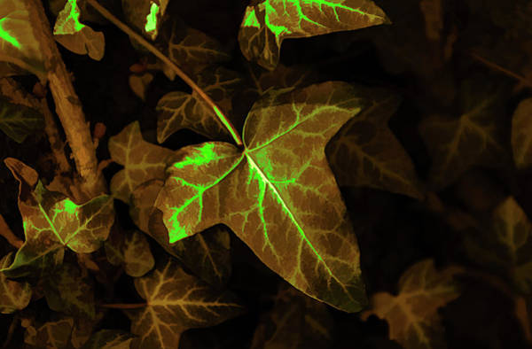 Digital Art - Radioactive Ivy by Scott Lyons