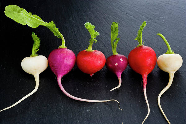 Florida Photograph - Radishes by Claudia Uribe