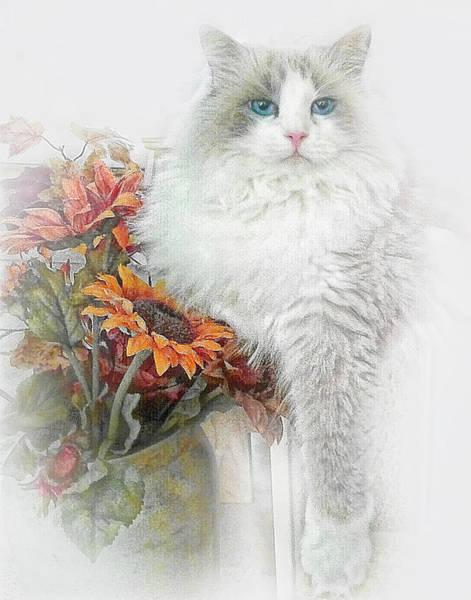Wall Art - Photograph - Ragdoll Cat And Sunflowers by David and Carol Kelly