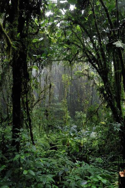 Prehistoric Era Wall Art - Photograph - Rain Forest by Pacoromero