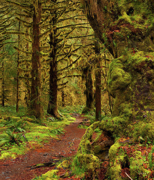 Photograph - Rain Forest Path by Leland D Howard