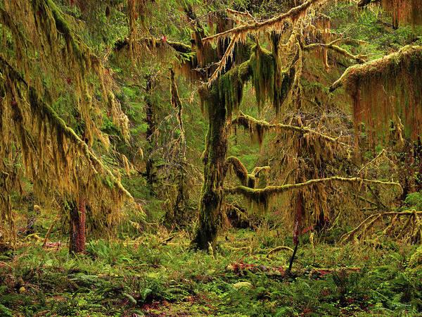 Photograph - Rain Forest Texture by Leland D Howard