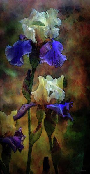 Photograph - Rain In The Iris Garden 6647 Idp_rig_2 by Steven Ward